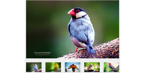 简单的jQuery图片相册插件
