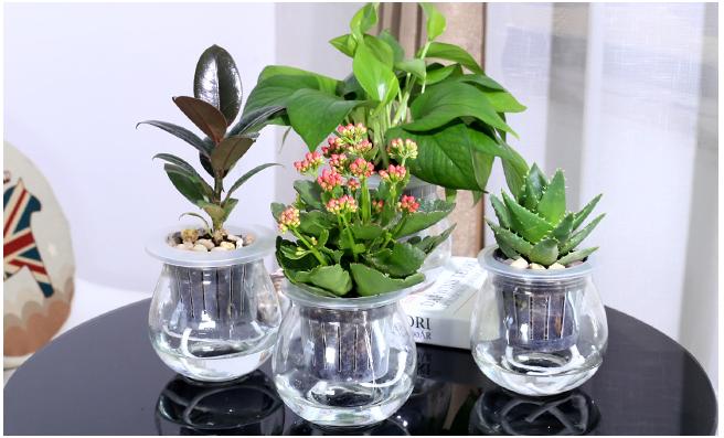 比较容易养活的办公室绿植有什么?