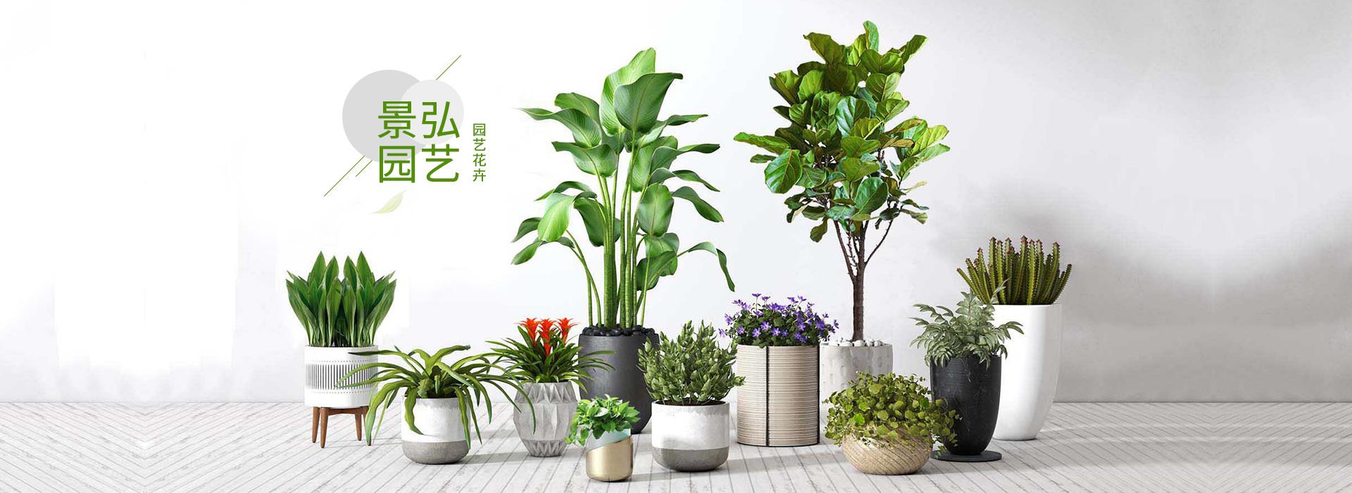 公司绿植出租-景弘园艺