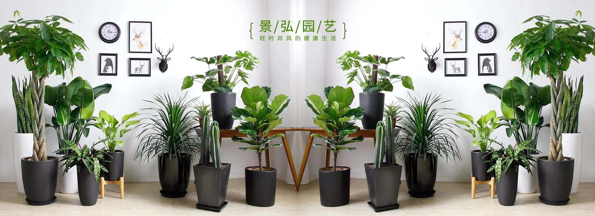 办公室绿植租摆-景弘园艺