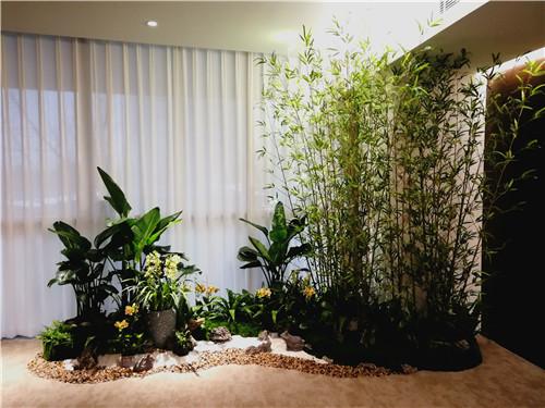 办公室放哪些绿色植物比较好