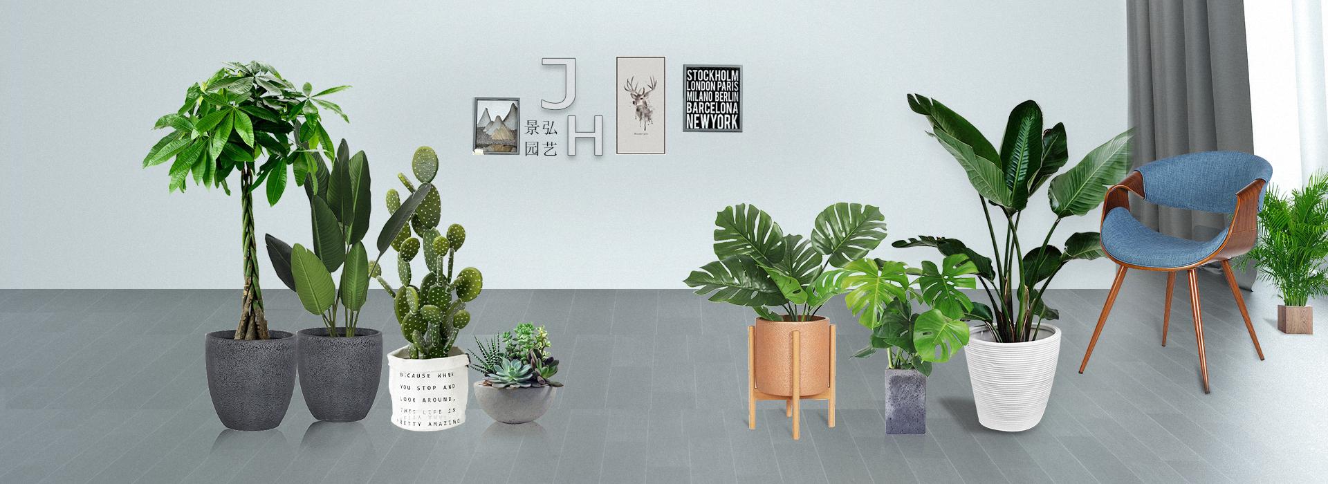 室内绿植租赁-景弘园艺