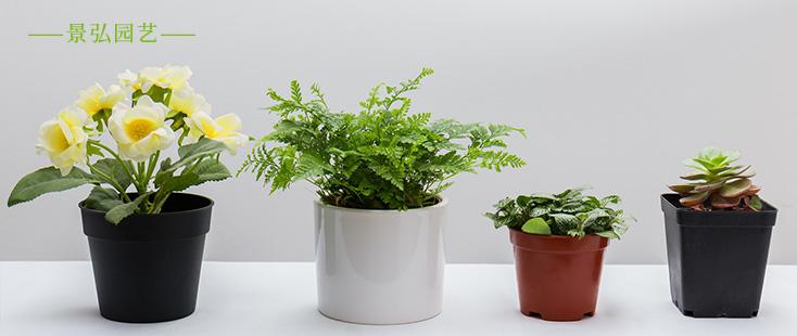 合肥适合种植什么花草