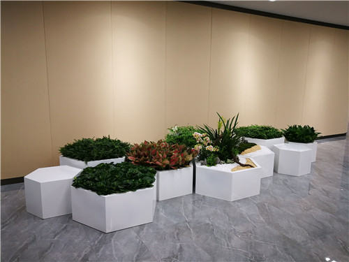 公司租赁绿植划算吗