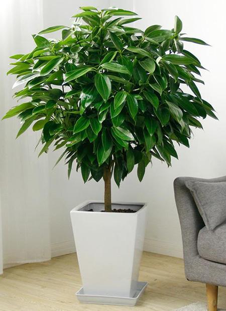 办公室适合养什么绿植