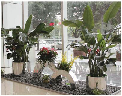 办公室租摆花卉绿植是奢侈吗