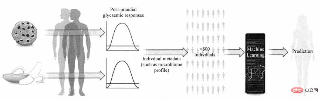 血糖浓度预测模型
