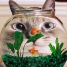 鱼缸里de猫