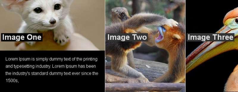 jQuery图片滑动门切换鼠标放到图片上滑出提示文字