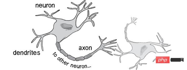 神经-1.png