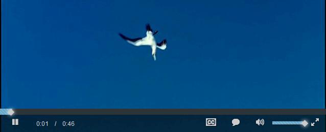 超炫的html5视频播放器代码