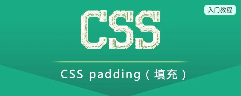 CSS padding(填充)