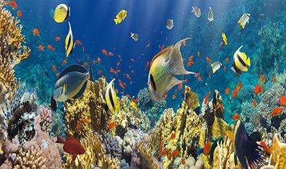 美丽的海底世界高清图片