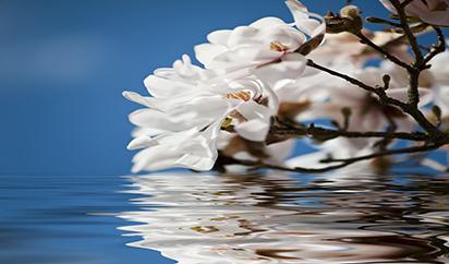 白色鲜花高清图片