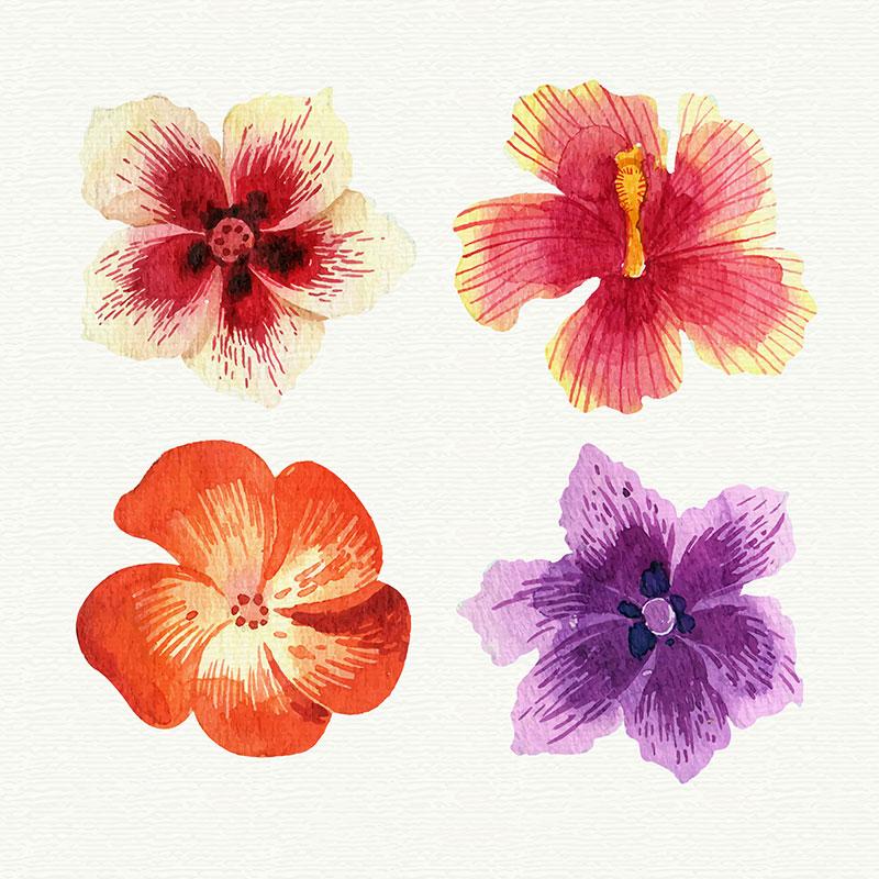 水彩热带花卉矢量素材下载(EPS+AI)